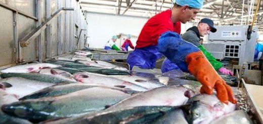Работа в Польше на рыбзаводе