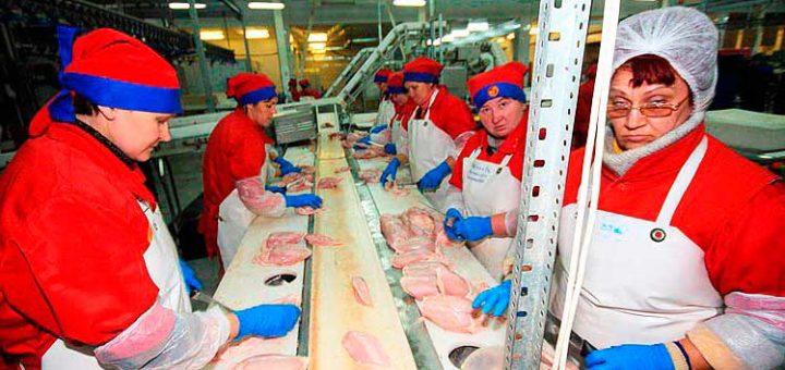 Работа в Польше на курином заводе
