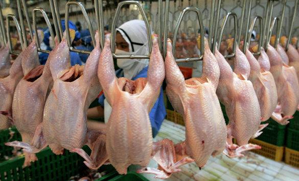 Работа в Польше на обработку птицы