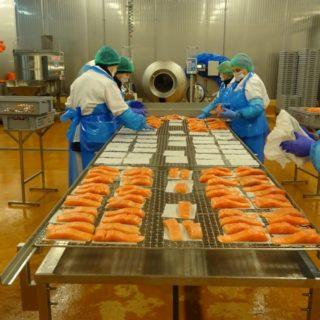 Работа в Польше на очистке рыбы