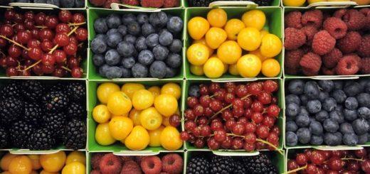 Работа в Польше на сортировке ягод