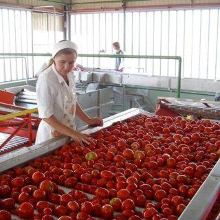 Работа в Чехии на переработке овощей и фруктов