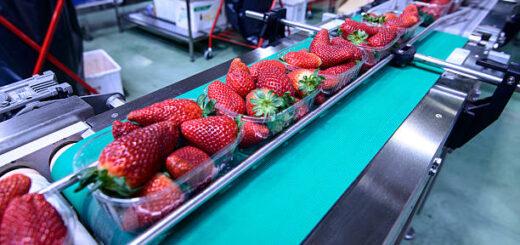 Работа в Польше на упаковке ягод