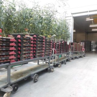 Работа в Польше - Сбор помидор