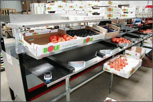 Работа в Польше на упаковке овощей